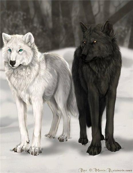 Мудрые притчи.  Pritcha-dva-volka