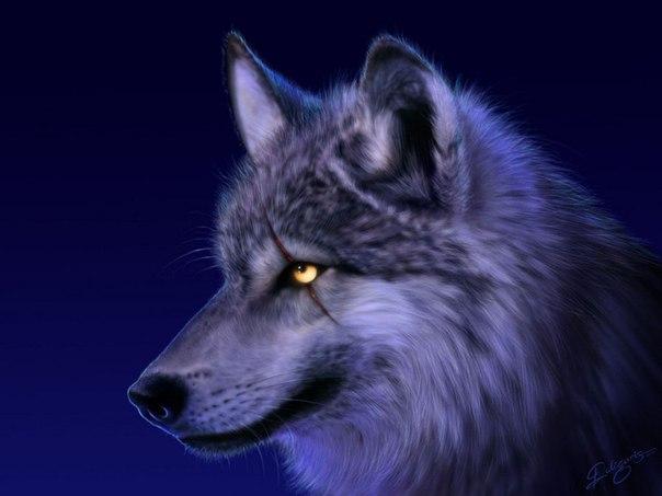 Христианская притча о верующем волке
