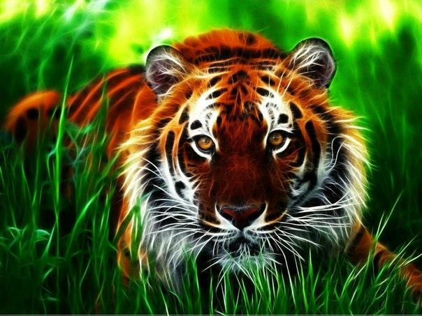 Мудрые притчи.  Pritcha-kovboj-i-tigr