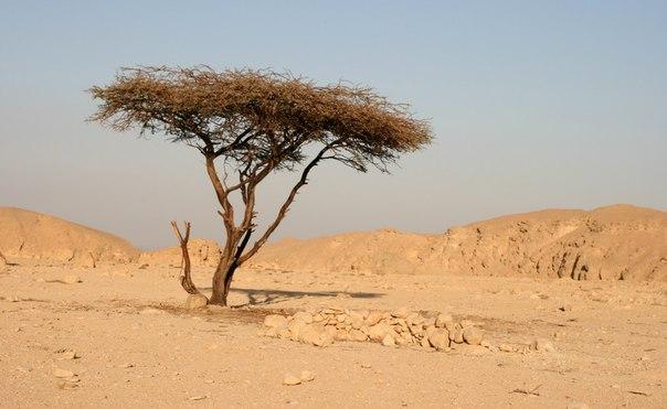Притча: Сухое дерево
